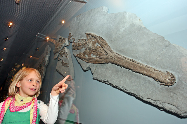 Mädchen im Fossilienmuseum