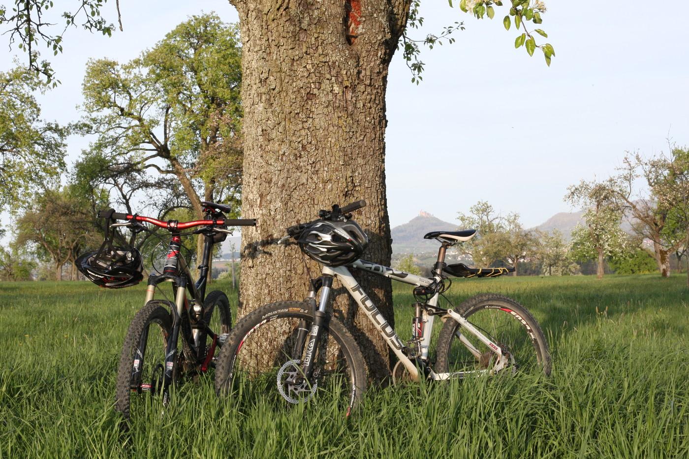 Räder lehnen am Baum