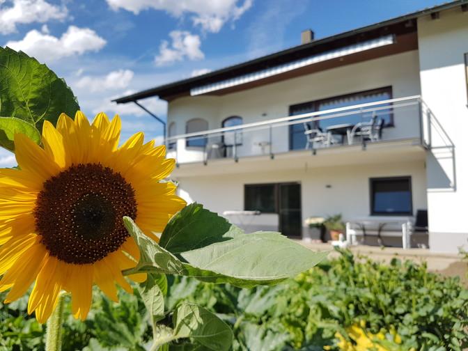 Haus mit Sonnenblume im Vordergrund, Fotowettbewerb 2016