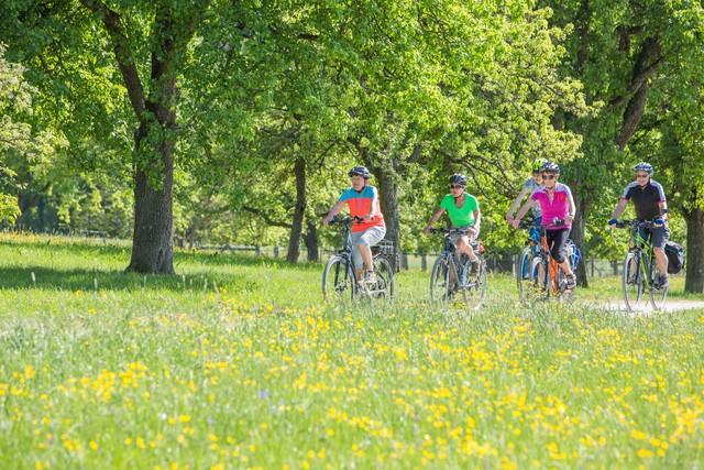 Radfahrer zwischen blühender Wiese und grünen Bäumen
