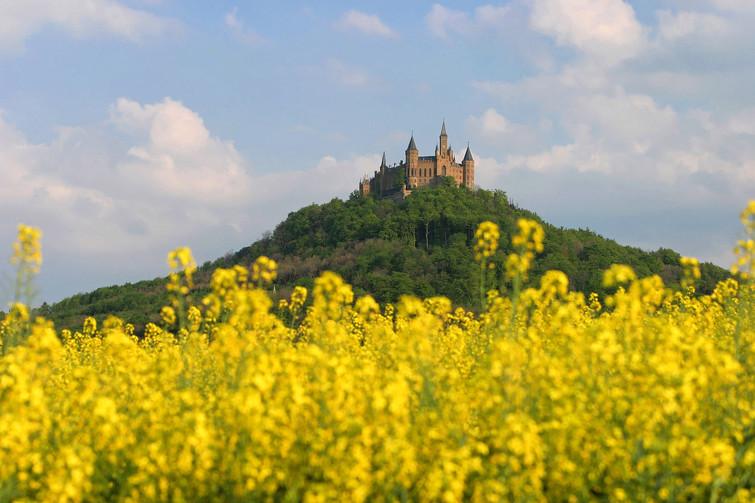 Burg Hohenzollern mir Rapsfeld im Vordergrund